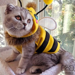 Beemo Cat Costume/Cosplay